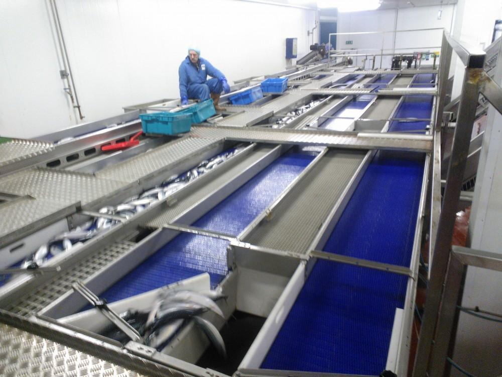 Modular Conveyor Belting
